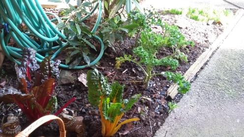 benefits of herbs, greens, vegan lifestyle